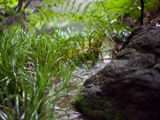 Sebuah air terjun kecil mengalir ke kolam kecil