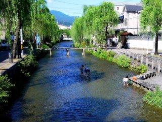 عندما يأتي الصيف في كيوتو الأباء يأتوا بأطفالهم ليلعبوا في النهر الضحل .