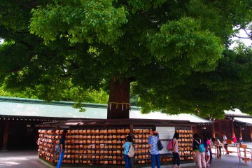 <p>On the trees are hanging &lsquo;ema&rsquo;, votive tablets for special personal prayers and gratitude toward the deities enshrined in Meiji-Jingū. You can write your wishes on the tablets and have them hung on the divine tree, to be offered to the deities by priests at mikesai, the daily morning ceremony.</p>