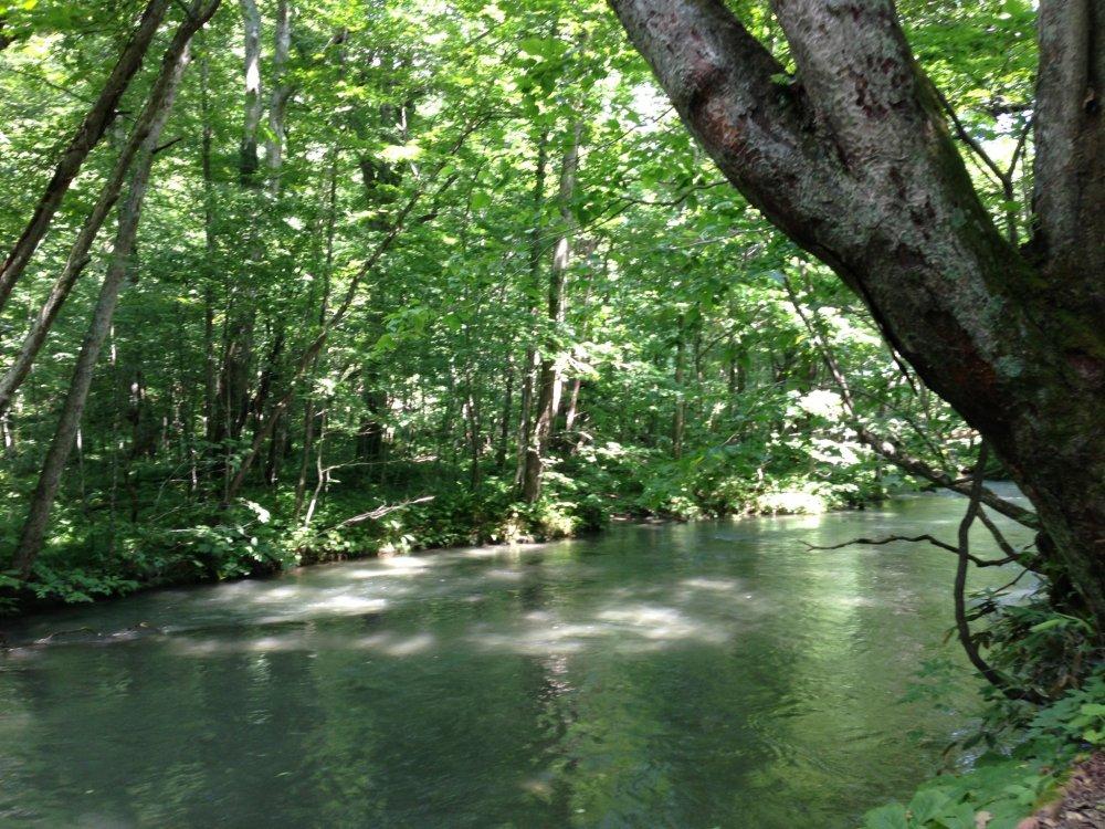 아오모리: 잔잔한 물과 오이라세 케이류의 시냇물 소리