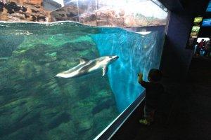 เด็กตื่นเต้นกับปลาโลมาที่ว่ายไปมา