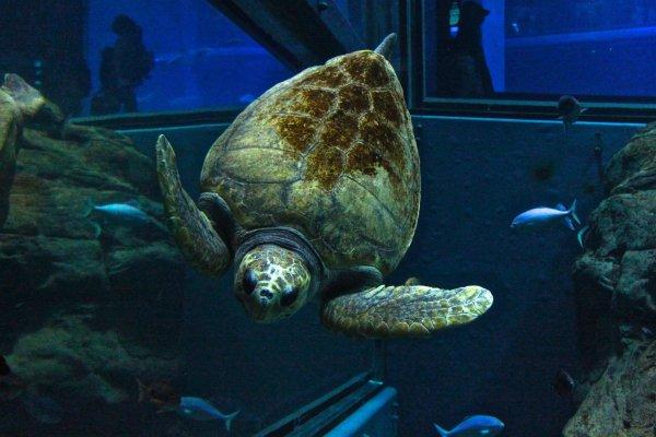 """สัมผัสพฤติกรรมนานาสัตว์ทะเลที่พิพิธภัณฑ์สัตว์น้ำโอซาห้า """"ไคยุคัง"""""""