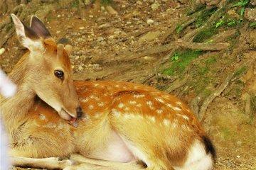 <p>鹿</p>