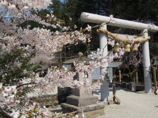 Nogi Shrine in spring is beautiful, with cherry blossom everywhere