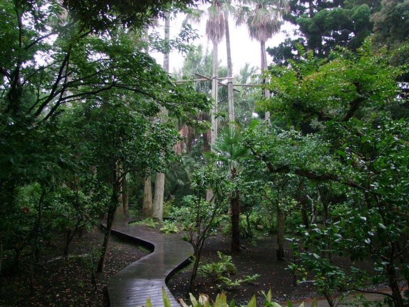 숲풀사이로 이어져있는 나무통로