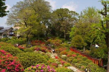 <p>The extensive azalea garden</p>