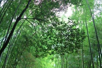<p>竹林小径</p>
