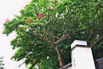 <p>路边的花木</p>