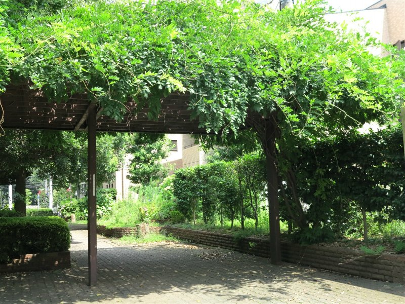 <p>Oakhouse的院子,满目绿意</p>