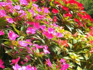 植物园内的花