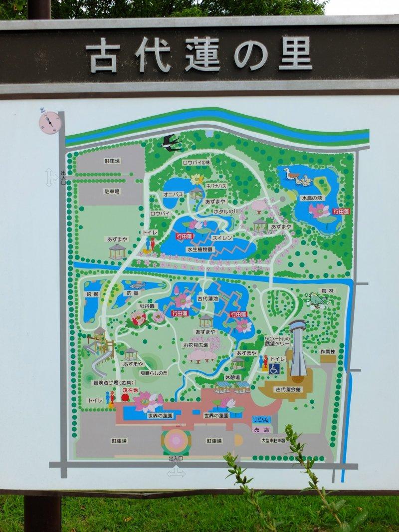 <p>The park map shows five different lotus ponds</p>