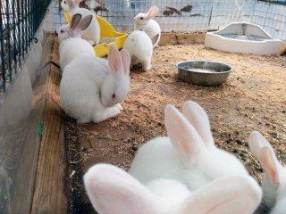 Il y a aussi une zone spécialement conçue pour caresser les lapins