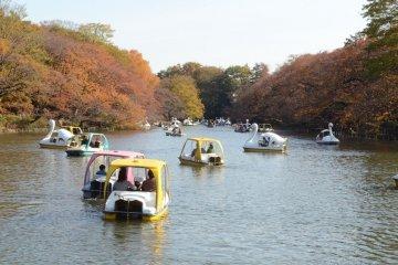 <p>游览在湖中的船</p>