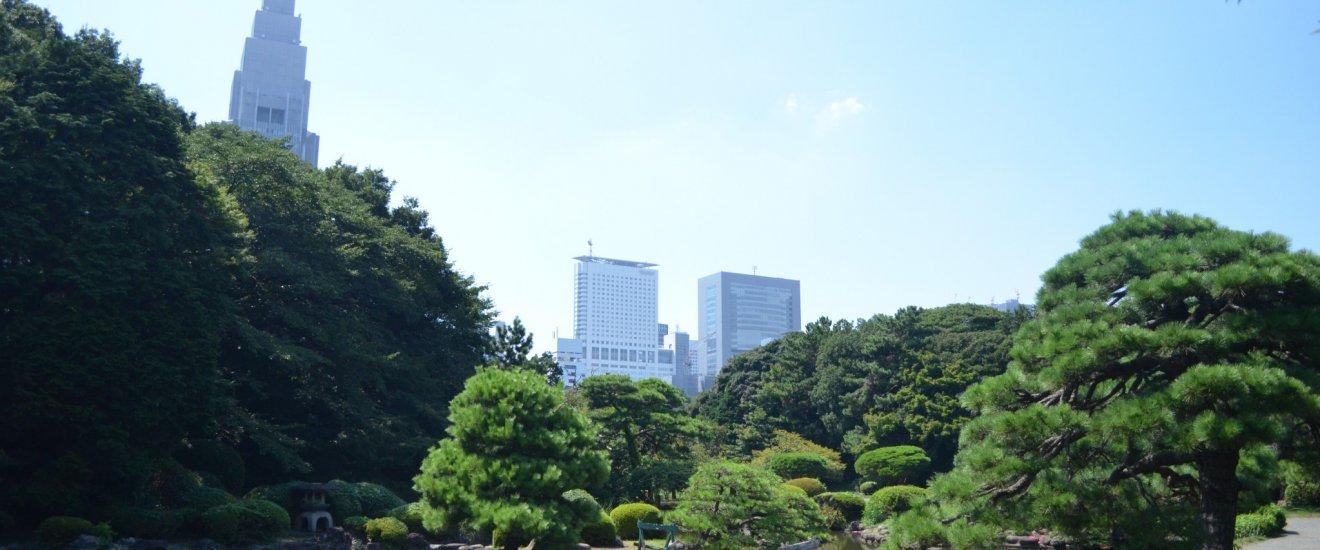 สวนชินจูกุ เกียวเอ็นเป็นสวนสาธารณะที่เก่าแก่ทและสวยงามมากที่สุดในโตเกียว