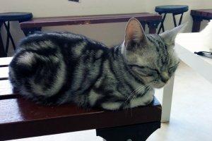 Kucing mengantuk