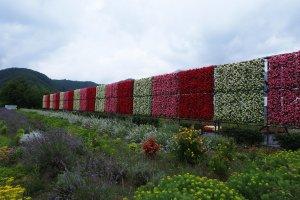 Taman bunga cantik di Taman Oishi.
