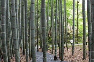 뜰을 내려오면 뒷산 옆으로 길게 뻗은 오솔길이 멋진 대나무 숲을 가로지르고 있다