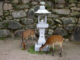 등 석상 아래의 풀을 한가로이 뜯어먹고 있는 두 사슴