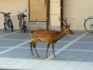사슴 뿔과 자전거 핸들 - 비슷하다고 생각했다