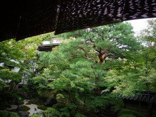 หลังฝนลง ต้นไม้เขียวสดชื่นเป็นพิเศษ
