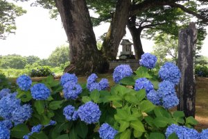 The shrine, just a little closer to the blue hydrangea flowers.