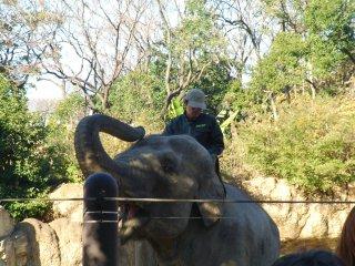 Un dresseur d'éléphants