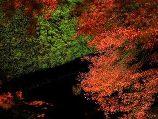 苔むした茅葺屋根の軒と紅葉の間からのぞく茶屋の灯りがなんとも風情がある