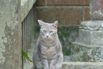 <p>At the Okichi Memorial Hall, the library staff said it was a stray cat... but I thought she was very beautiful, like Okichi herself....</p>