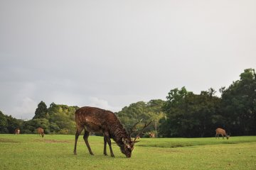 <p>Being this close to 飛火野, you are likely to come by countless zen deers roaming past the hotel entrance.</p>