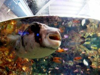 Рыбы с таким же любопытством разглядывают людей, как люди - их самих.