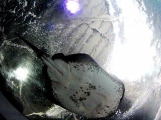 Есть аквариум, где рыбы проплывают над вашей головой, и вы можете рассмотреть их со всех сторон, даже с брюха.