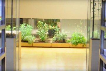 Greenest Building in Tokyo