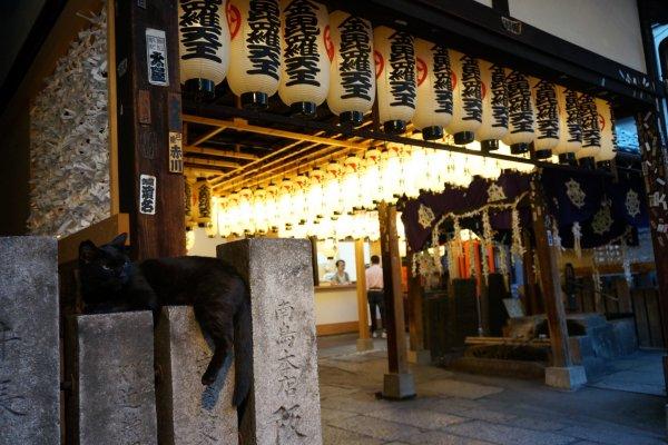 มีแมวดำนอนเฝ้าวัด Hozenji ตำแหน่งนี้ทุกคืน