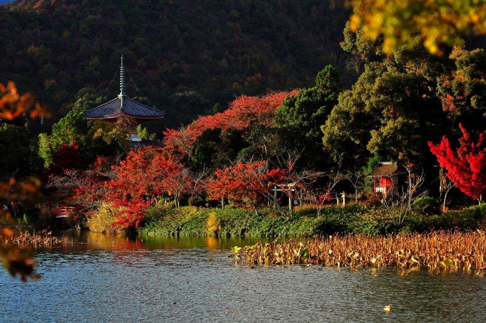 大沢池の北側、放生池を挟んで臨む「心経宝塔」