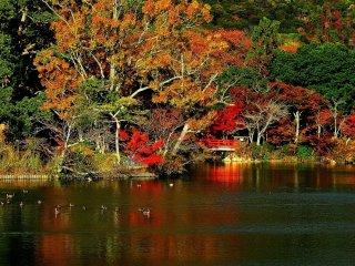 池に浮かぶ天神島の橋、朱色がとても映える
