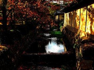 寺院を囲むように流れる有栖川 夕陽が射し、落ち葉が流れるこのカットもカメラマンに人気