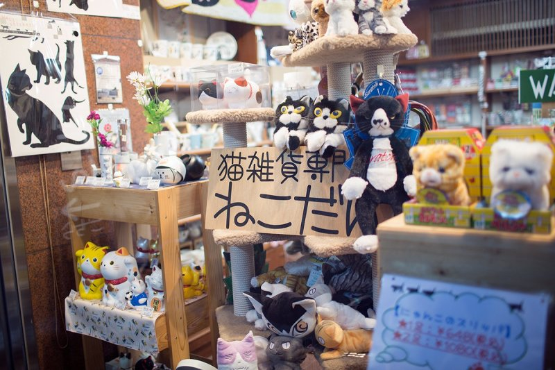 <p>The Necodan shop window abounds with cat delights</p>