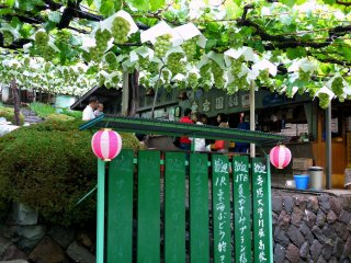 Festive small pink and white lanterns