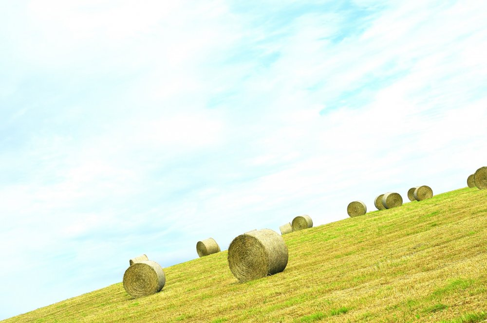Rolls of hay left casually on a hillside - a common sight in Hokkaido