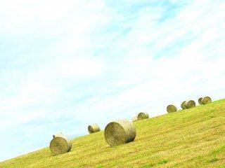 Des bottes de foin sont posées sur le flanc d'une colline, une scène banale à Hokkaido