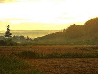 Paysage observé à l'aube, sur une petite route près de la Hanabito Kaido 237 (Route des Fleurs), en me rendant au Mont Asahi