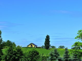 L'arbre de Ken et Marry observé depuis la colline Zerubu (la colline des Herbes)
