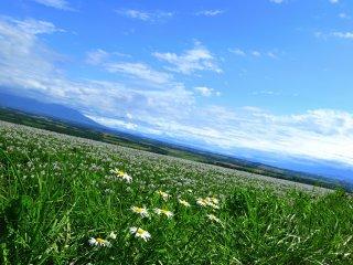 La colline Shuujitsu près d'Asahikawa.  J'ai incliné mon appareil photo en tentant désespérément de capturer la plus grande vue horizontale possible.