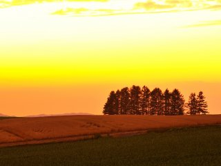 """A la fin du spectaculaire coucher de soleil : """"La colline avec des mélèzes et la maison au toît rouge"""""""