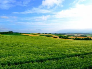 Magnifique méli-mélo de champs sur de petites collines. Envouté par le paysage, je me suis promis de revenir l'été prochain.