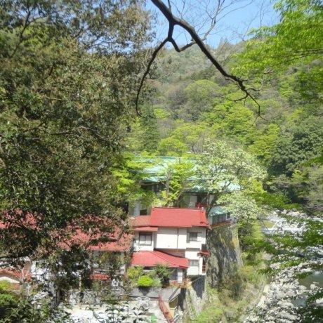 Chamberlain's Hakone Promenade