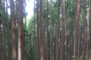 Лес на обратном пути