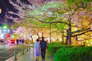 교토 다카세가와 산책