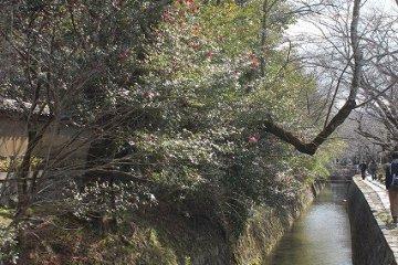 동백나무나 목련 같은 꽃나뭇가지가 수로를 덮듯이 핀다