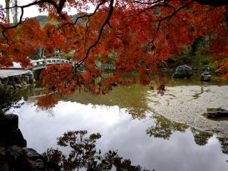 Maple branches overhang the pond
